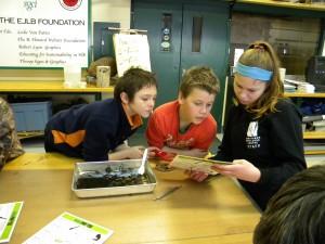 A Wethead helping students identify invertebrates.