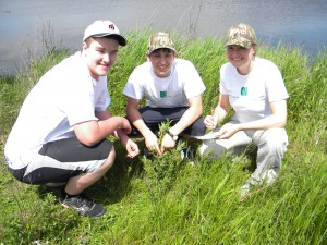 Jake Richard, Brandon LeBlanc and Megan Mitton (left to right) searching for evidence of galarucella beetles on the invasive flower species: purple loosestrife