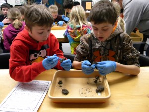 Students excited to find bones in an owl pellet.